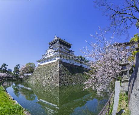 福岡県 桜 小倉城 (勝山公園)の写真素材 [FYI04508803]