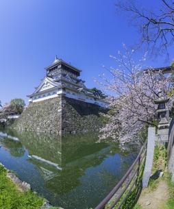 福岡県 桜 小倉城 (勝山公園)の写真素材 [FYI04508805]