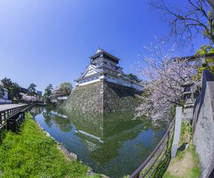 福岡県 桜 小倉城 (勝山公園)の写真素材 [FYI04508808]