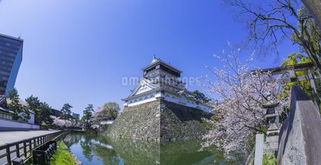 福岡県 桜 小倉城 (勝山公園)の写真素材 [FYI04508810]