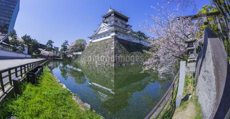 福岡県 桜 小倉城 (勝山公園)の写真素材 [FYI04508812]