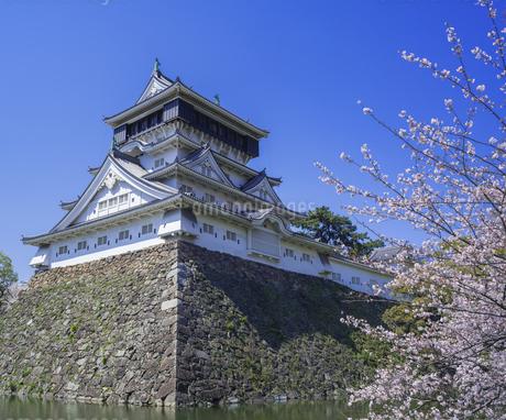福岡県 桜 小倉城 (勝山公園)の写真素材 [FYI04508815]