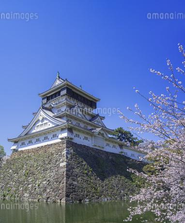 福岡県 桜 小倉城 (勝山公園)の写真素材 [FYI04508817]