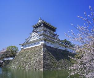 福岡県 桜 小倉城 (勝山公園)の写真素材 [FYI04508819]