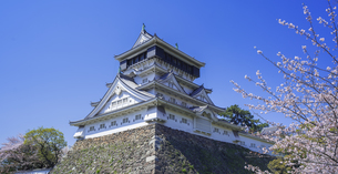 福岡県 桜 小倉城 (勝山公園)の写真素材 [FYI04508821]