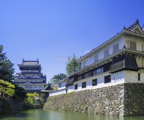 福岡県 桜 小倉城 (勝山公園)の写真素材 [FYI04508824]