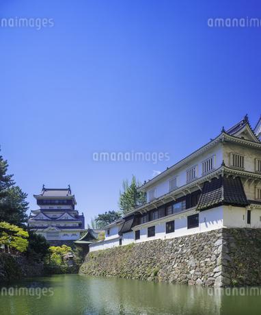 福岡県 桜 小倉城 (勝山公園)の写真素材 [FYI04508826]
