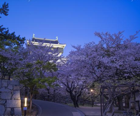 福岡県 桜 小倉城 (勝山公園) 夕景の写真素材 [FYI04508834]