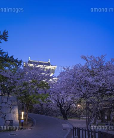 福岡県 桜 小倉城 (勝山公園) 夕景の写真素材 [FYI04508837]