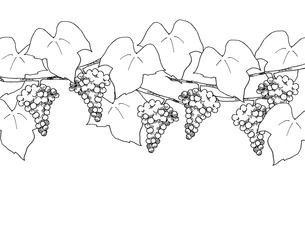 葡萄の線画のイラスト素材 [FYI04508842]