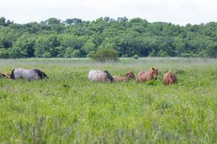馬の放牧の写真素材 [FYI04509173]