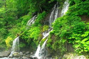 6月 緑の吐竜の滝の写真素材 [FYI04509177]