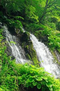 6月 緑の吐竜の滝の写真素材 [FYI04509180]