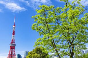 新緑の木立と東京タワーの写真素材 [FYI04509786]