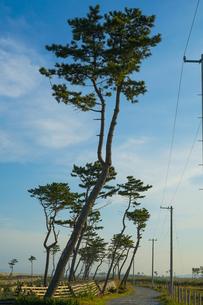 荒浜海岸の風景(宮城県仙台市)の写真素材 [FYI04509843]