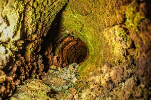 溶岩樹型洞窟探索の写真素材 [FYI04509900]