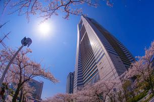 満開の桜と横浜みなとみらいの街並みの写真素材 [FYI04510005]