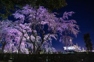山下公園の桜と氷川丸の写真素材 [FYI04510032]