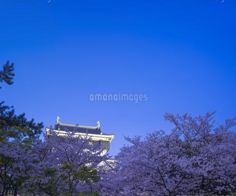 福岡県 桜 小倉城 (勝山公園) 夕景の写真素材 [FYI04510116]