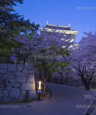福岡県 桜 小倉城 (勝山公園) 夕景の写真素材 [FYI04510117]