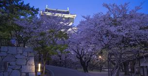 福岡県 桜 小倉城 (勝山公園) 夕景の写真素材 [FYI04510118]