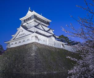 福岡県 桜 小倉城 (勝山公園) 夕景の写真素材 [FYI04510123]