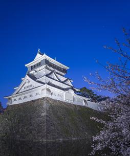福岡県 桜 小倉城 (勝山公園) 夕景の写真素材 [FYI04510124]