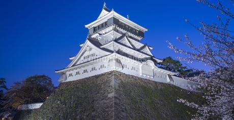 福岡県 桜 小倉城 (勝山公園) 夕景の写真素材 [FYI04510126]