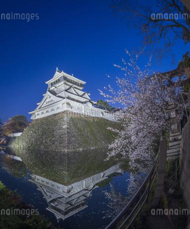 福岡県 桜 小倉城 (勝山公園) 夕景の写真素材 [FYI04510129]