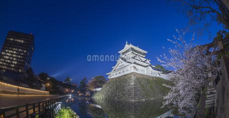 福岡県 桜 小倉城 (勝山公園) 夕景の写真素材 [FYI04510130]