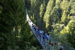 カナダ バンクーバー キャピラノのサスペンションブリッジの写真素材 [FYI04510257]