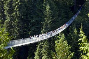 カナダ バンクーバー キャピラノのサスペンションブリッジの写真素材 [FYI04510260]