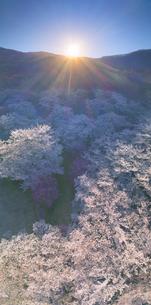 戸倉宿キティパークの桜と朝日の写真素材 [FYI04510439]