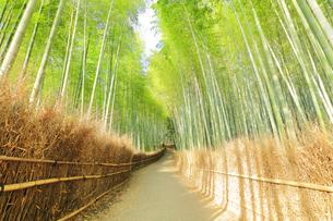 京都 竹林の小径の写真素材 [FYI04510839]