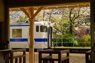 桜と網田駅の写真素材 [FYI04510955]