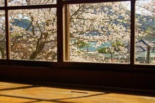窓越しから見える桜の写真素材 [FYI04510960]