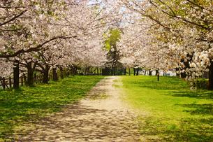 春の熊本市街地の写真素材 [FYI04510973]
