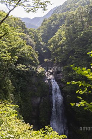 宮城県 秋保大滝の写真素材 [FYI04510993]