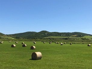 北海道の青空と牧草ロールのある風景の写真素材 [FYI04511135]