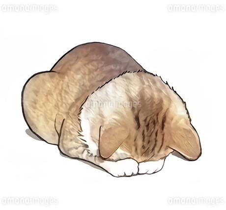 謝罪ネコ のイラスト素材 [FYI04511595]