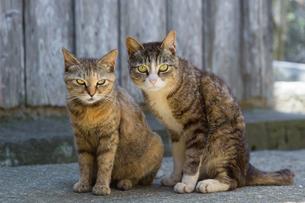 大人の猫と子供の猫の写真素材 [FYI04511869]