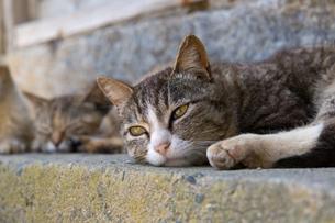 顔をつけて休むネコの写真素材 [FYI04511933]