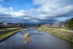 春の鴨川の写真素材 [FYI04512417]