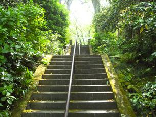 鎌倉・妙本寺の入口階段の写真素材 [FYI04512947]