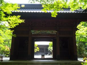 新緑の季節の鎌倉・妙本寺の境内の写真素材 [FYI04512959]