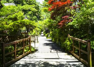 新緑の季節の北鎌倉の写真素材 [FYI04512984]