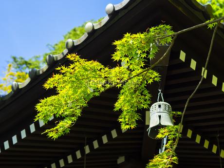 鎌倉・長谷寺の新緑の写真素材 [FYI04513047]