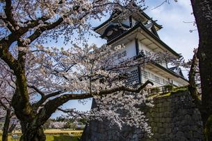 金沢城公園の桜と城の写真素材 [FYI04513775]