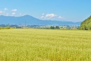 大野盆地とそばの花の写真素材 [FYI04514888]