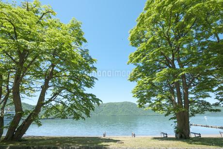 新緑の十和田湖畔の写真素材 [FYI04514961]